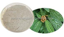 BV manufacturer supply competitive price top quality natural Loquat Leaf Extract
