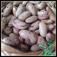 Healthy Food Light Speckl Kidney Beans or White Speckled Sugar Beans For South Africa Market