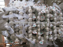 china jinxiang garlic seller