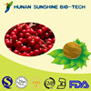 Factory Supply Pesticides Free Chinese Magnoliavine Fruit extract 2% Schisandrins & 1% Schisandrin A