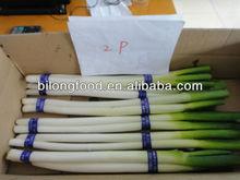 2015 new crop fresh chinese long onion