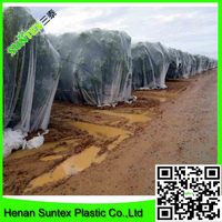 100% new PP bird protection net/green plastic anti bird net/mono mist nets for small birds trapping