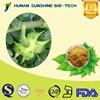 100% Natural Saponins Tribulus Terrestris P.E. Powder 20% / 40% / 70%/ 90% Saponins