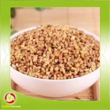 Chinese buckwheat tea treating diabetes