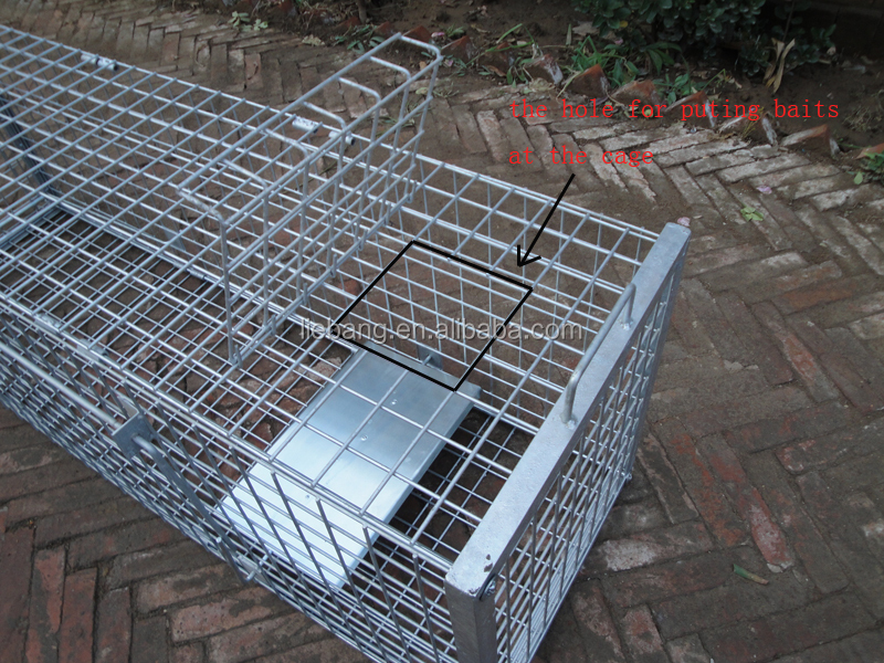 how to get rid of fox in cage