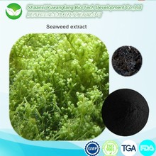 assistenza sanitaria naturale estratto di alghe marine ascophyllum nodosum