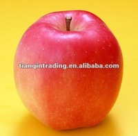 shandong fresh red star apple