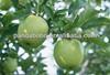 bulk apple whole sale fresh green apples organic green apples for sale