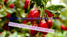 buy ningxia goji berries/dried goji berry fruit/goji berries price