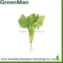 GMP Factory Supply spinach prices/spinach seedling powder/spinach powder
