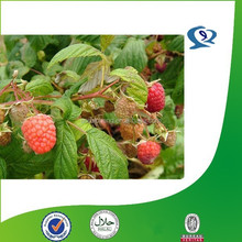 raspberry ketone manufacturers, red raspberry leaves extract, raspberry extract 4 raspberry ketone