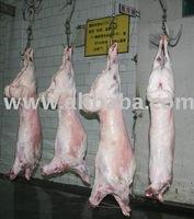 Lamb Carcass / Six Cuts / Four Cuts / Legs