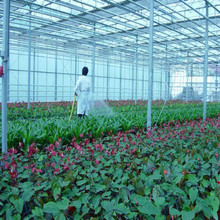 hydroponic plastic greenhouse for sales