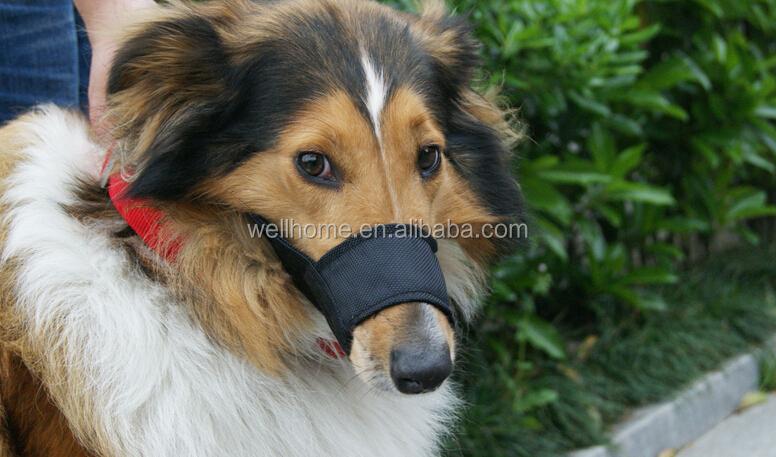 Big Dog Called The Babysitter Dog | Dog Breeds Picture