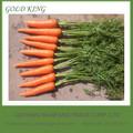 extractor de jugo fresco de zanahoria vegetales lista de precios