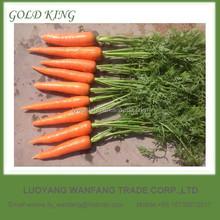 Fresh juicer carrot vegetable price list
