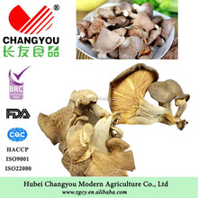 Chinese Dried Oyster mushrooms( pleurotus ostreatus )supplier
