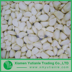Hot sell delicate multicolor garlic price in china 2013