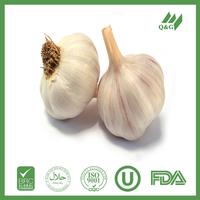 2015 pure fresh natural garlic
