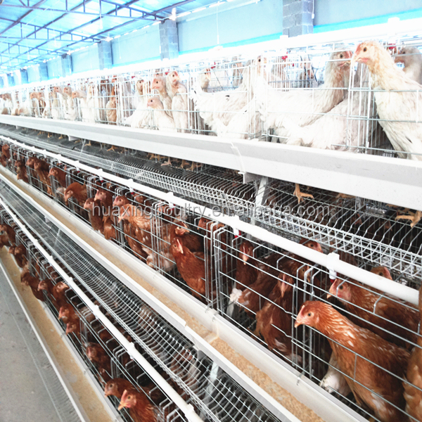 good quality chicken cage in animal cages/ wire mesh cages/ chicken wire animal cage