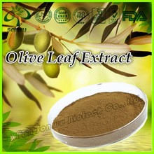 Natural olive leaf extract powder/olive leaf extract in bulk