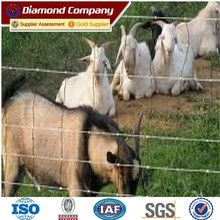 high quality galvanized deer fence / Field Steel Fence price