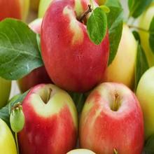 original concentrate apple juice