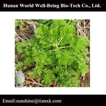 Hunan GMP,kosher,ISO herb extract manufacturer artemisinin powder 99%