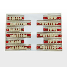 Factory Dental Supply False Acrylic Teeth/Denture Composite Anterior and Posterior Teeth