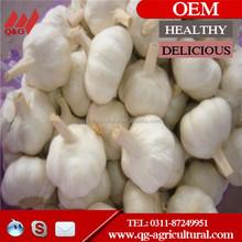 natural normal white garlic wholesale price
