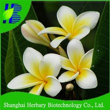 Tropical flower seeds plumeria seeds supply