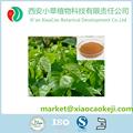 Natural hoja de la mora extracto 1-Deoxynojirimycin productos diabetes