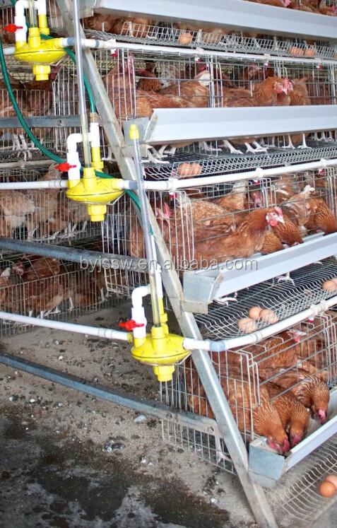 chicken cage-417.jpg