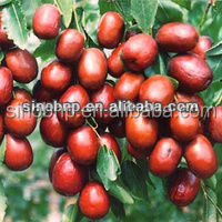 BNP Supplies Best Quality and 100% Natural wild African Mango Seed Extract--Irvingia Gabonensis