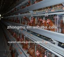 equipo automático para pollos de engorde de pollo jaula de la batería