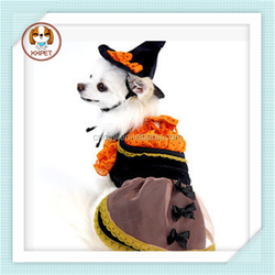 Halloween witch suit turns role-playing suit for dog
