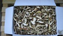 funghi porcini, mushrooms, waldpilzen, champignon