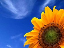 Sunflower oil, sunflower seed