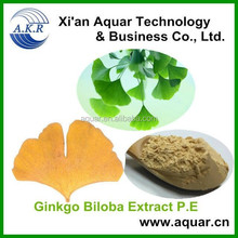 Antioxidant and promote brain health supplement Ginkgo Biloba Extract