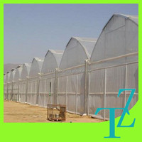 The Cheapest Taize PE Film Covered High Tunnel Greenhouse