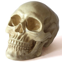Halloween 1Pc Mini Human Skull Props Life Size Replica Realistic Resin Crafts Small Head Haunted House Terrifying Decoration