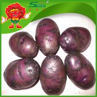 2025 new crop holland sweet potato purple potato for sale