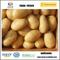 frais hollande pomme de terre importateurs à dubaï