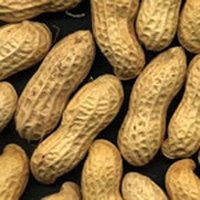 GROUNDNUTS IN SHELL- HS CODE 12021019