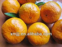 high quality fresh Mandarin orange