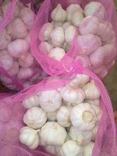 chinese garlic producers