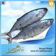 No.1 Frozen Fresh Wholesale Tuna Fish Export With Prices