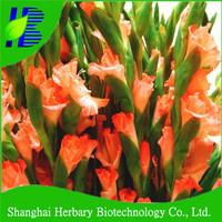 Hot sale gladiolus flower bulbs for cutting