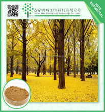 Manufacturer Hot Sale Products Natural Ginkgo Biloba Extract 24/6 by HPLC