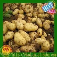 Fresh Potato Price Holland Potato Chip Yellow Sweet Potato Seed